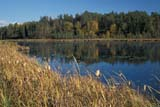 SEA AUT SCE  MB  IAW1807410DLILY POND IN AUTUMNWHITESHELL PROV PARK     09..© IAN A. WARD                    ALL RIGHTS RESERVEDAUTUMN;BOREAL;CATTAILS;LAKES;MANITOBA;MB_;PLAINS;PONDS;PP_;PRAIRIES;SCENES;WATER;WHITESHELL_PPLONE PINE PHOTO              (306) 683-0889