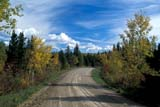 SEA AUT SCE  MB  PNB2000107DCOUNTRY ROAD IN AUTUMNRIDING MOUNTAIN NAT. PK      ....© PAUL BROWNE                   ALL RIGHTS RESERVEDAUTUMN;GRAVEL;MANITOBA;MB_;NP_;PLAINS;PLATEAU;PRAIRIES;RIDING_MOUNTAIN_NP;ROADS;RURAL;SCENES;TREES LONE PINE PHOTO              (306) 683-0889
