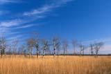 SEA SPR SCE  MB  IAW030801DCLOUDS, ASPENS AND BIG BLUESTEM GRASSTALL GRASS PRAIRIE PRESERVE             04© IAN A. WARD                 ALL RIGHTS RESERVEDASPENS;BIG_BLUESTEM;CLOUDS;MANITOBA;MB_;PLAINS;PRAIRIES;SCENES;SKY;SPRING;TALL_GRASS_PRAIRIE_PRESERVE;TREESLONE PINE PHOTO              (306) 683-0889