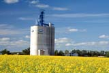 SEA SUM SCE  MB     1612864DUGG ELEVATOR AND CANOLAFANNY STEELE                      08                  © CLARENCE W. NORRIS      ALL RIGHTS RESERVEDCANOLA;CROPS;FANNY_STEELE;FARMING;ELEVATORS;GRAIN_TERMINALS;MANITOBA;MB_;PLAINS;PRAIRIES;RURAL;SCENES;SUMMER;TERMINALS;UGGLONE PINE PHOTO              (306) 683-0889