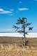 TREE AND FROZEN LAKE, COLVILLE LAKE