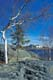 ROCK, TREES, LAKE AND BUILDING, YELLOWKNIFE