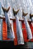 SEA SUM SCE  NT  KJM0007617D  VTDRYING FISHHOLMAN                           06/..© KEVIN MORRIS               ALL RIGHTS RESERVEDABORIGINAL;ARCTIC;BULLETINS;CULTURE;FISH;FISH_DRYING;FISHING;FOOD;HOLMAN;INDUSTRY;NORTHWEST;NORTHWEST_TERRITORIES;NT_;NWT;OUTDOORS;TERRITORIES;SUMMER;VTL  LONE PINE PHOTO            (306)  683-0889