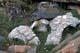 BOWHEAD WHALE BONES, THULE ERA, WAGER BAY