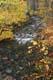FALL COLOURS AND STREAM, LAKE O'LAW PROVINCIAL PARK, CAPE BRETON ISLAND
