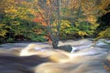 SEA AUT SCE  NS  CRS0000252D RUNNING WATER AND FALL COLOURSWEST BRANCH BEAR RIVER   10/..© CLIFF SANDESON               ALL RIGHTS RESERVEDATLANTIC;AUTUMN;MARITIMES;MOTION;NOVA;NOVA_SCOTIA;NS_;RIVERS;SCENES;SCOTIA;WATER;WEST_BRANCH_BEAR_RIVERLONE PINE PHOTO              (306) 683-0889