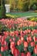 DARWIN TULIPS, CULLEN GARDENS AND MIN VILLAGE, WHITBY