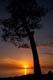 ELM TREE AT SUNSET, LAKE ONTARIO, SANDBANKS PROVINCIAL PARK