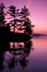 PINES REFLECTED AT TWILIGHT, ROSSEAU LAKE