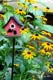ECHINACEA GOLDSTURN IN BLOOM, MINI BIRDHOUSE, PORT PERRY