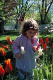 SEA SPR SCE  ON  BMM1001261D  MR  VTGIRL IN TULIP GARDENPORT DALHOUSIE                04/..© BEV MCMULLEN                ALL RIGHTS RESERVEDACTIVITIES;CENTRAL;CHILDREN;FLOWERS;GARDEN;GIRL;ON_;ONTARIO;OUTDOORS;PEOPLE;PORT_DALHOUSIE;SPRING;TULIPS;VTLLONE PINE PHOTO              (306) 683-0889