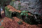 SEA WIN SCE  ON     1915214DMOSS COVERED ROCK, AUTUMN LEAVES, FERNSBRACEBRIDGE                          128© CLARENCE W. NORRIS          ALL RIGHTS RESERVEDBRACEBRIDGE;BEDROCK;CENTRAL;FERNS;MOSS;ON_;ONTARIO;SHIELD;WINTERLONE PINE PHOTO                  (306) 683-0889