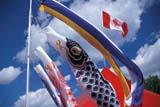 LOC EDM MIS  AB  DSR1000427D  WIND SOCKS, CANADIAN FLAG, JAPANESE PAVILIONEDMONTON HERITAGE FESTIVALEDMONTON                        08/17© DUANE S. RADFORD         ALL RIGHTS RESERVEDAB_;ALBERTA;CANADIAN;CULTURE;EDMONTON;EDMONTON_HERITAGE_FESTIVAL;FESTIVALS;FLAGS;JAPANESE;SOCKS;SUMMER;WIND_SOCKS;WINDLONE PINE PHOTO              (306) 683-0889