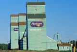 SEA AUT SCE  AB  CWN2207919DROW OF AGRICORE ELEVATORSSEDGEWICK                          09/..© CLARENCE W. NORRIS        ALL RIGHTS RESERVEDAB_;AGRICORE;ALBERTA;AUTUMN;BUILDINGS;ELEVATORS;FARMING;PLAINS;PRAIRIES;SCENES;SEDGEWICK;STRUCTURESLONE PINE PHOTO              (306) 683-0889