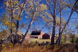 SEA AUT SCE  AB  KJM0310402D         RED BARN AND FALL COLOURED TREESHUXLEY                             10/..© KEVIN MORRIS                ALL RIGHTS RESERVEDAB_;ALBERTA;AUTUMN;BARNS;FARMING;HUXLEY;PLAINS;PRAIRIES;RURAL;SCENES;STRUCTURES;TREESLONE PINE PHOTO              (306) 683-0889