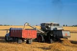 SEA AUT SCE  AB  KJM0311215D  COMBINE AND TRUCK IN OAT FIELDTHREE HILLS                      09/..© KEVIN MORRIS                ALL RIGHTS RESERVEDAB_;ALBERTA;AUTOS;AUTUMN;COMBINING;CROPS;FARMING;FIELDS;HARVEST;OATS;PLAINS;PRAIRIES;RURAL;SCENES;THREE_HILLS;TRUCKINGLONE PINE PHOTO              (306) 683-0889