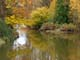 HOPE RIVER IN AUTUMN, CHILLIWACK