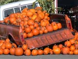 SEA AUT SCE  BC  WFS04A3617DXPUMPKIN TRUCKSARDIS                               09/..© WILLIAM F. SMITH            ALL RIGHTS RESERVEDAUTOS;AUTUMN;BC_BRITISH;BRITISH_COLUMBIA;COLUMBIA;CORDILLERA;CROPS;FARMING;FOOD;INTERIOR;PRODUCE;PUMPKINS;RURAL;SARDIS;SCENESLONE PINE PHOTO              (306) 683-0889