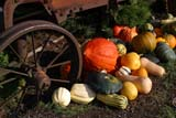 SEA AUT SCE  BC  WFS04A5476DXSQUASH AND WAGON WHEELSARDIS                               09/..© WILLIAM F. SMITH            ALL RIGHTS RESERVEDAUTUMN;BC_;BRITISH;BRITISH_COLUMBIA;CORDILLERA;COLUMBIA;CROPS;FARMING;FOOD;INTERIOR;PRODUCE;RURAL;SARDIS;SCENES;SQUASH;WAGONS;WHEELSLONE PINE PHOTO              (306) 683-0889