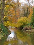 SEA WIN SCE  BC  WFS06E9006DX   VTHOPE RIVER IN AUTUMNCHILLIWACK                   10..© WILLIAM F. SMITH       ALL RIGHTS RESERVEDALPINE;AUTUMN;BC_;BRITISH;BRITISH_COLUMBIA;BULLETINS;CHILLIWACK;COLUMBIA;CORDILLERA;FOREST;HOPE_RIVER;INTERIOR;REFLECTIONS;RIVERS;SCENES;TREES;VTL;WATERLONE PINE PHOTO              (306) 683-0889