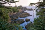 SEA SPR SCE  BC  BRH1902123DHETINKIS PARKUCLUELET                           05/11© BLAKE R. HYDE                ALL RIGHTS RESERVEDALPINE;BC_;BRITISH;BRITISH_COLUMBIA;COLUMBIA;CORDILLERA;HETINKIS_PARK;ISLAND;OCEAN;PACIFIC;SCENES;SHORELINE;SPRING;UCLUELET;VANCOUVER;VANCOUVER_ISLAND;WATER;WEST_COASTLONE PINE PHOTO              (306) 683-0889