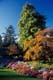 FLOWERS AND FOLIAGE, QUEEN ELIZABETH PARK, VANCOUVER