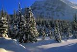 PAR NAT KOO  BC  JLB1900432D  SNOW-COVERED TREES NEAR CONTINENTAL DIVIDEKOOTENAY NAT PK.            01/..© JOHN L. BYKERK              ALL RIGHTS RESERVEDALPINE;BC_;BRITISH;BRITISH_COLUMBIA;COLUMBIA;CORDILLERA;KOOTENAY_NP;MOUNTAINS;NP_;SNOW;TREES;WINTER LONE PINE PHOTO              (306) 683-0889