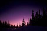 PAR NAT KOO  BC  JLB1900502D  TREES AT TWILIGHT NEAR CONTINENTAL DIVIDEKOOTENAY NAT PK.            01/..© JOHN L. BYKERK              ALL RIGHTS RESERVEDALPINE;BC_;BRITISH;BRITISH_COLUMBIA;COLUMBIA;CORDILLERA;FOREST;KOOTENAY_NP;NP_;SILHOUETTE;SKY;SNOW;TREES;TWILIGHT;WINTER LONE PINE PHOTO              (306) 683-0889