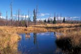 PAR NAT RID  MB  PNB2000106DAUTUMN PONDRIDING MOUNTAIN NAT. PK   ../..© PAUL BROWNE                ALL RIGHTS RESERVEDAUTUMN;BOREAL;MANITOBA;MARSHES;MB_;NP_;PLAINS;PLATEAU;PONDS;PRAIRIES;REFLECTIONS;RIDING_MOUNTAIN_NP;WATERLONE PINE PHOTO              (306) 683-0889