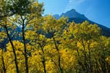 PAR NAT WAT  AB  IAW1706707DFALL COLOURS AND MOUNTAIN PEAKWATERTON LAKES NAT PK    09/..© IAN A. WARD                    ALL RIGHTS RESERVEDAB_;ALBERTA;ALPINE;AUTUMN;CORDILLERA;MOUNTAINS;NP_;SCENES;SUMMER;TREES;WATERTON_LAKES_NPLONE PINE PHOTO              (306) 683-0889