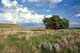 PRAIRIE GRASSLANDS AND SUMMER SKY, GRASSLANDS NATIONAL PARK