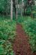 TRAIL THROUGH THE FOREST, ROCK GLACIER TRAIL, KLUANE NATIONAL PARK