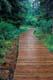 BOARDWALK THOUGH FOREST, ROCK GLACIER TRAIL, KLUANE NATIONAL PARK