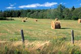 SEA SUM SCE  QC  CRS0000277D  HAY BALESGASPE PENINSULANEW CARLISLE                   08/..© CLIFF SANDESON            ALL RIGHTS RESERVEDBALES;CENTRAL;FARMING;FENCES;FOREST;GASPE;GASPE_PENINSULA;HAY;NEW_CARLISLE;QC_;QUEBEC;RURAL;SCENES;SUMMERLONE PINE PHOTO              (306) 683-0889