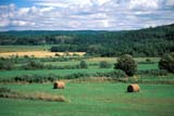 SEA SUM SCE  QC  CRS0000278D  HAY BALES IN FIELDGASPE PENINSULASAINT FELICITE                   08/..© CLIFF SANDESON            ALL RIGHTS RESERVEDBALES;CENTRAL;FARMING;FOREST;GASPE;GASPE_PENINSULA;HAY;QC_;QUEBEC;RURAL;SAINT_FELICITE;SCENES;SUMMER LONE PINE PHOTO              (306) 683-0889