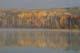 AUTUMN SHORELINE IN MORNING FOG, ANGLIN LAKE