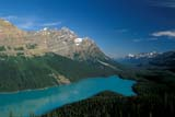 PAR NAT BAN  AB  REH1000371DPEYTO LAKE VIEWPOINTBANFF NATIONAL PARK            08© ROYCE HOPKINS                  ALL RIGHTS RESERVEDAB_;ALBERTA;ALPINE;BANFF_NP;CORDILLERA;LAKES;MOUNTAINS;NP_;PEYTO_LAKE;ROCKY;SCENES;SUMMER;TURQUOISE;WATERLONE PINE PHOTO                 (306) 683-0889