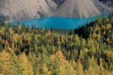 PAR NAT BAN  AB  REH1000864DMORAINE LAKE AND LARCH TREES FROM ABOVE IN AUTUMNBANFF NATIONAL PARK            10© ROYCE HOPKINS                  ALL RIGHTS RESERVEDAB_;AERIAL;ALBERTA;ALPINE;AUTUMN;BANFF_NP;CORDILLERA;FOREST;LAKES;LARCHES;MORAINE_LAKE;MOUNTAINS;NP_;ROCKY;SCENES;TAMARACKS;TREES;TURQUOISE;WATERLONE PINE PHOTO                 (306) 683-0889
