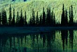 PAR NAT BAN  AB  REH1000863DSPRUCE TREES AND REFLECTIONSBANFF NATIONAL PARK            07© ROYCE HOPKINS                  ALL RIGHTS RESERVEDAB_;ALBERTA;ALPINE;BANFF_NP;CORDILLERA;FOREST;MOUNTAINS;NP_;REFLECTIONS;ROCKY;SCENES;SPRUCES;SUMMER;TREES;WATERLONE PINE PHOTO                 (306) 683-0889