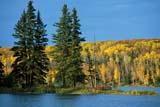 PAR NAT PRI  SK   WS12285DAUTUMN SHORELINETHE NARROWS, WASKESIU LAKEPRINCE ALBERT NATIONAL PARK 09© WAYNE SHIELS                      ALL RIGHTS RESERVEDAUTUMN;BOREAL;FOREST;LAKES;MIXED;MIXED_FOREST;NP_;PARKLAND;PRINCE_ALBERT_NP;RURAL;SASKATCHEWAN;SK_;THE_NARROWS;TREES;WASKESIU_LAKE;WATERLONE PINE PHOTO                 (306) 683-0889