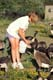 GIRL FEEDING CANADA GEESE, FORT WHYTE NATURE CENTRE, WINNIPEG