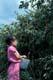 GIRL PICKING CHOKECHERRIES, HUDSON BAY