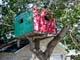 TREE HOUSE, ESTON