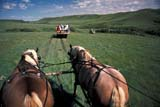 PEO ACT OUT  SK   WS21757D  NMR  PEOPLE ON TRAIL RIDEGRASSLANDS NAT. PK.        07/..© WAYNE SHIELS                ALL RIGHTS RESERVEDANIMALS;GRASSLANDS;GRASSLANDS_NP;HORSES;NP_;OUTDOORS;PEOPLE;PLAINS;PRAIRIES;RURAL;SASKATCHEWAN;SK_;SUMMER;TOURISM;TRAIL_RIDES;WAGONS;WESTERNLONE PINE PHOTO              (306) 683-0889