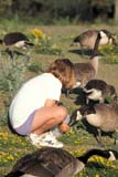 PEO ACT SUM  MB     1806823D  VT  MRGIRL FEEDING CANADA GEESEFORT WHYTE NATURE CENTREWINNIPEG                           07                   © CLARENCE W. NORRIS      ALL RIGHTS RESERVEDACTIVITIES;BIRDS;CANADA_GEESE;CHILDREN;ECOLOGY;FEEDING;FEMALE;FORT_WHYTE_NATURE_CENTRE;MANITOBA;MB_;MR_;OUTDOORS;PEOPLE;PLAINS;PRAIRIES;SUMMER;VTL;WINNIPEGLONE PINE PHOTO              (306) 683-0889