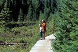 PEO ACT SUM  ON  BMM1001154D  MRMOTHER & DAUGHTER ON BOARDWALK, MIZZY TRAILALGONQUIN PROV PK             ..                   © BEV MCMULLEN                   ALL RIGHTS RESERVEDACTIVITIES;ALGONQUIN_PP;ECOLOGY;ENVIRONMENTAL_IMPACT;FAMILIES;FEMALE;MIZZY_TRAIL;MR_;ON_;ONTARIO;OUTDOORS;PEOPLE;PP_;SUMMER;TRAILS;WALKINGLONE PINE PHOTO              (306) 683-0889