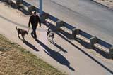 PEO ACT SUM  SK   WS11727DPEOPLE WALKING ON MEEWASIN TRAILSASKATOON                           07                   © WAYNE SHIELS                    ALL RIGHTS RESERVEDACTIVITIES;ANIMALS;DOGS;MEEWASIN;OUTDOORS;PEOPLE;PETS;RECREATION;SASKATCHEWAN;SASKATOON;SHADOWS;SIDEWALKS;SK_;SUMMER;TRAILS;WALKINGLONE PINE PHOTO              (306) 683-0889