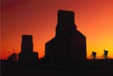 PEO ACT SUM  SK  CWN 02A020D  (DC)   MRGIRL & BOY RIDING PAST GRAIN ELEVATOR AT SUNSET OSLER                                   08/27              © CLARENCE W. NORRIS         ALL RIGHTS RESERVEDACTIVITIES;BICYCLING;BIKING;COMPOSITE;COUPLE;ELEVATORS;FRIENDS;MR_;OSLER;OUTDOORS;PEOPLE;PLAINS;PRAIRIES;RURAL;SASKATCHEWAN;SCALE;SCENES;SILHOUETTE;SK_;SKY;STRUCTURES;SUMMER;SUNSETSLONE PINE PHOTO                  (306) 683-0889