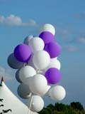 PEO ACT SUM  SK   CWN02T0027D  VTPURPLE AND WHITE BALLOONSCAMECO VICTORIA PARK SUMMER FESTIVALSASKATOON                            06..© CLARENCE W. NORRIS           ALL RIGHTS RESERVEDBALLOONS;BULLETINS;FESTIVALS;FUN;OUTDOORS;PLAINS;PRAIRIES;RECREATION;SASKATCHEWAN;SASKATOON;SK_;SUMMER;VTLLONE PINE PHOTO                  (306) 683-0889