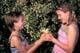 GIRLS PICKING CHOKECHERRY BLOSSOMS, PIKE LAKE PROVINCIAL PARK